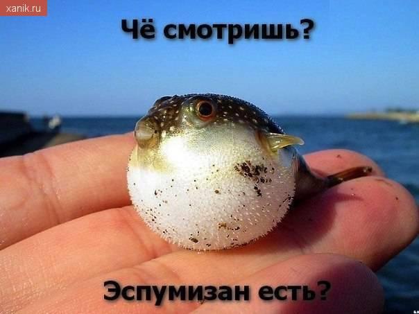 Че смотришь? Эспумизан есть?