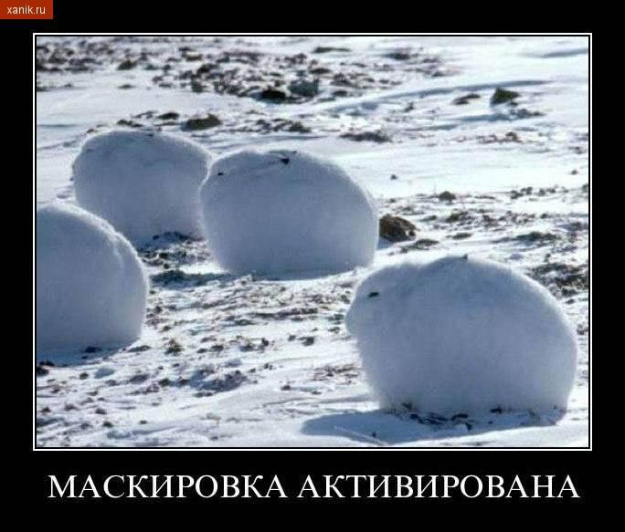 Демотиватор. Зайцы на снегу. Маскировка активирована