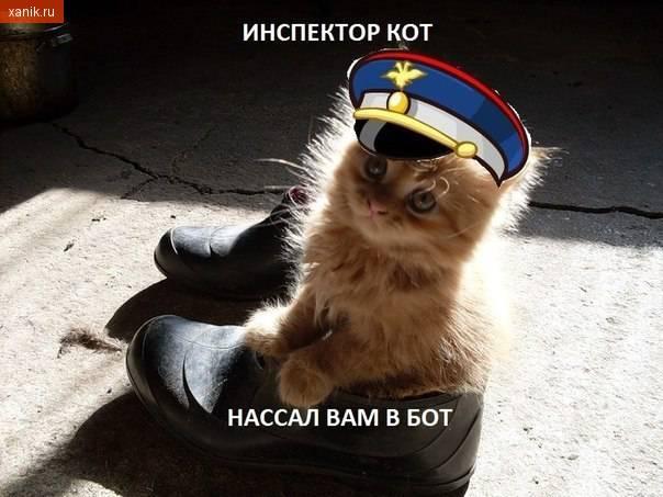 Инспектор кот нассал вам в бот