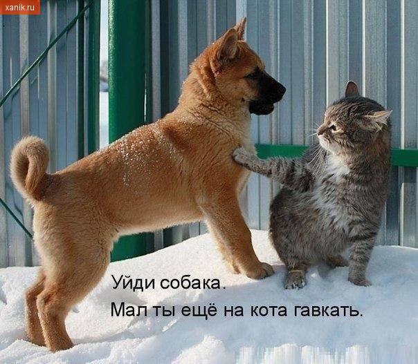 Уйди собака. Мал ты еще на кота гавкать