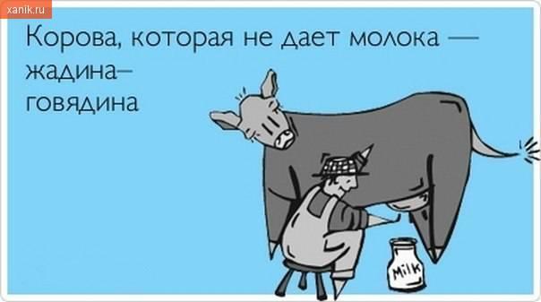 Корова, которая не дает молока - жадина-говядина